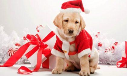 """Truffe dei """"cani di Natale"""" in Piemonte, Veneto e Molise"""