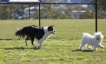 Nuova area cani a San Maurizio, ecco dove