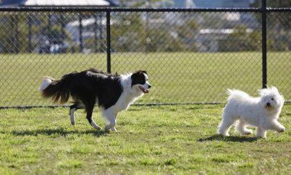 Cani a passeggio solo se al guinzaglio, scatta l'ordinanza