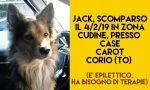 Cane scomparso da Corio, l'appello dei padroni