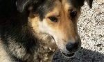 Cane scappato dopo un incidente in autostrada: ritrovato dopo 12 ore