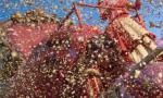 Troppi coriandoli: carro a rischio denuncia a Trecate