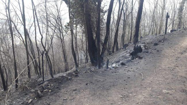 Brucia la terra sopra Belmonte... un pezzo di cuore se ne va   FOTO e VIDEO
