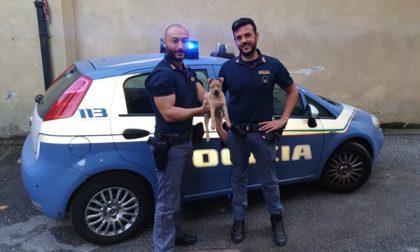 Cucciolo ritrovato dalla Polizia: diventa mascotte del Commissariato