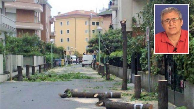 Stragi di alberi per far passare il 5G? Segnalati casi anche in zona | VIDEO