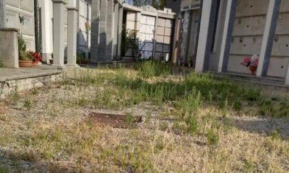 Incuria al cimitero di San Benigno: l'amministrazione corre ai ripari