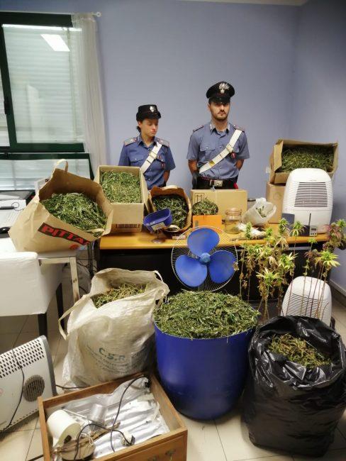Disoccupato coltiva marijuana in aree demaniali, 80 piante scoperte dai carabinieri nelle Valli di Lanzo