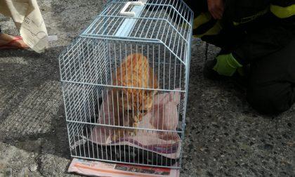 Gattino si rifugia nel cofano di un'auto, si cercano i proprietari