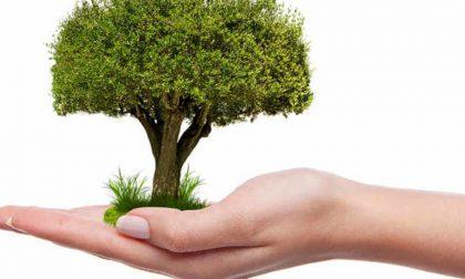 Cerimonia degli alberi alla primaria di San Maurizio, dopo un anno finalmente verranno piantati