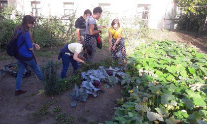 L'orto giardino sociale di Cuorgnè ha dato i suoi frutti | FOTO e VIDEO