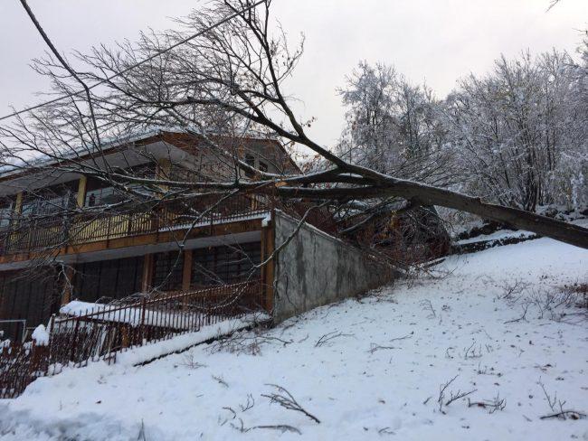 Valli di Lanzo al buio: decine di alberi caduti