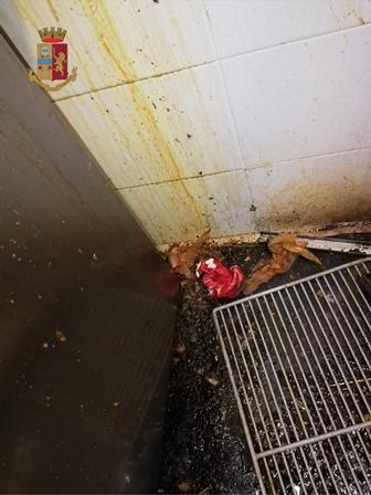 Blatte, sporcizia e cibo mal conservato: chiuso locale a Torino | FOTO