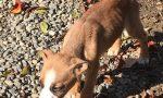 Grosso: cuccioli denutriti abbandonati in una scatola | LE FOTO