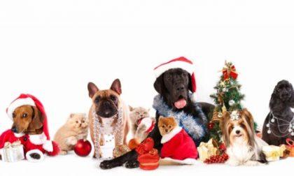 Mandateci il selfie di Natale con il vostro animale domestico