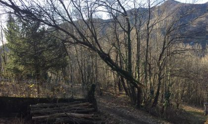 Maltempo: alberi invadono le strade di Corio