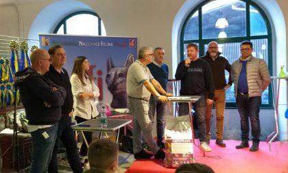 Successo per la terza esposizione internazionale felina a Cuorgnè | FOTO