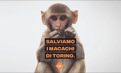 """Macachi liberi torna a protestare contro il progetto """"Light up"""" che vede coinvolta l'Università di Torino"""