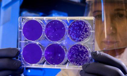 Coronavirus, aggiornamento dalla Regione Piemonte: 17 nuovi decessi