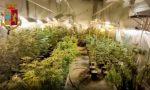 Un magazzino in centro città adibito alla coltivazione di marijuana | FOTO