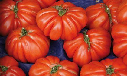 Frammenti di vetro nella salsa di pomodoro: allerta del Ministero della Salute