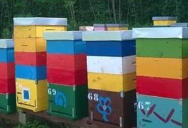 Ladro di api nell'eporediese, secondo episodio in poche settimane