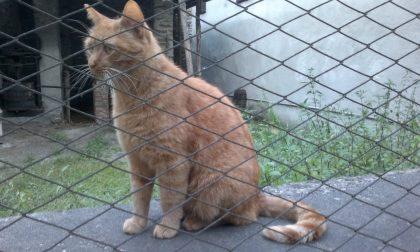 Morto da 4 anni i gatti lo aspettano ancora