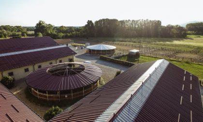 Riparte anche lo sport equestre: il Centro Equestre Arione organizza nuovi appuntamenti