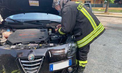 Gattino incastrato nel vano motore, salvato da pompieri e consigliere comunale