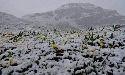 Neve a giugno imbiancati i prati fioriti in alta quota sulle montagne del Canavese