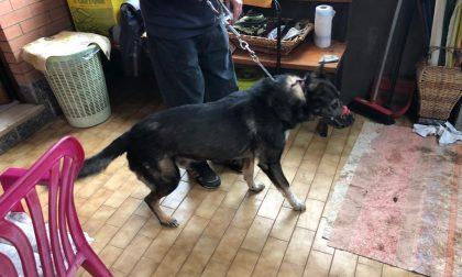 Bambina aggredita da due cani a Mappano AGGIORNAMENTO