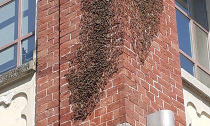 Sciame d'api «invade» Ciriè 2000