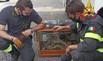 Boa abbandonato in una teca: salvato e consegnato allo zoo