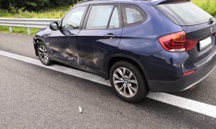 Incidente sulla Torino-Aosta, cinghiale investito all'altezza di Sa Giorgio | FOTO
