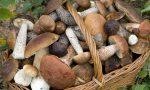 Controllo di commestibilità dei funghi, attivo il centro Asl