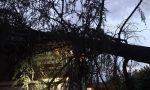 Maltempo abbatte un albero a Mappano | FOTO