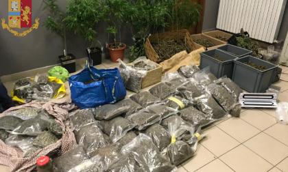 Serre artigianali e oltre 63 kg di droga: arrestati coltivatori di canapa