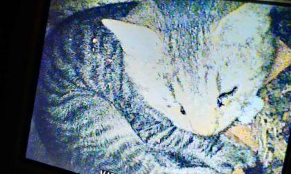 Gattino cade nella canna fumaria, salvato dai Vigili del fuoco | FOTO