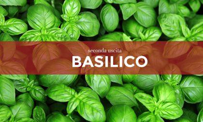 Tutti ortisti: in edicola da oggi con i nostri giornali i semi di basilico