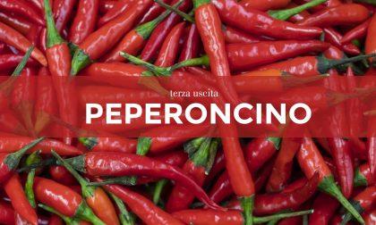 Tutti ortisti: in edicola con Il Canavese e il Giornale di Ivrea i semi di peperoncino