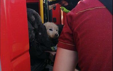 I Vigili del fuoco di Volpiano salvano un cagnolino