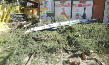 Paura in centro a Ciriè per un albero crollato in via Dante Alighieri