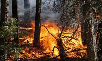 Massima pericolosità incendi boschivi, ecco i divieti