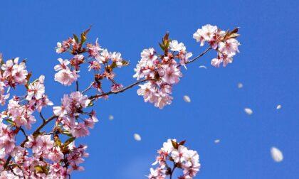 Primavera in ritardo, ancora freddo e gelate per qualche giorno