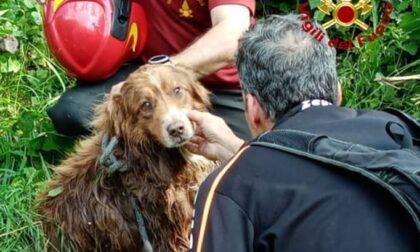 Cane cade in un canale e viene trascinato via dalla corrente, salvato dai Vigili del fuoco