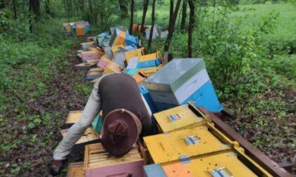 Raid vandalico contro un apicoltore, parte la gara di solidarietà