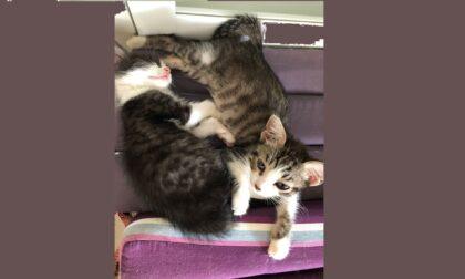 Gattini gettati via, uno trovato nel bidone dell'umido a Ivrea