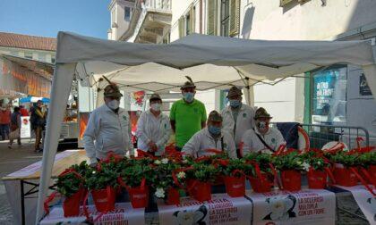 Gli Alpini scendono in piazza per la ricerca contro la Sclerosi Multipla