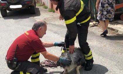 Cane cade in un canale, salvato dai Vigili del fuoco di Mathi