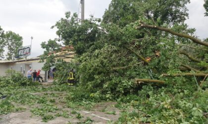 Tromba d'aria tra Cafasse e Fiano: alberi cadono nel parcheggio danneggiando il ristorante e le auto