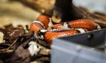 Per disfarsi del terrario dei serpenti, lo svuota nel cassonetto dell'umido